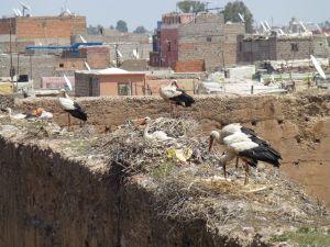 Storks at the palace