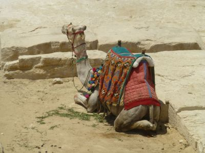 One of the many camels we declined to ride