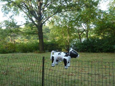 He grazed on the lawn