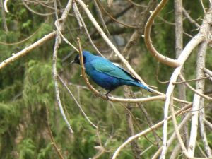 A brightly coloured bird at the castle