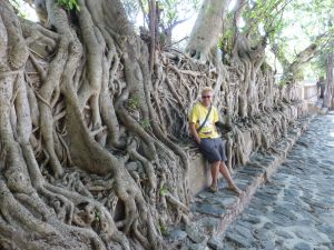 The tree roots growing down