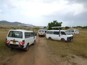 Safari vans on the search for animals