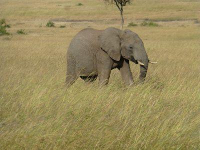 An amazing elephant