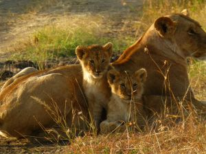 With cubs