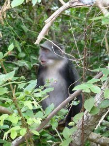 A monkey watching us
