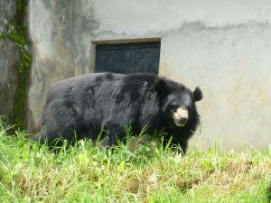 Bear at the zoo