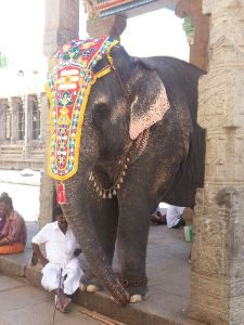 Elephant at the temple