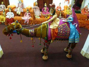 I want the camel