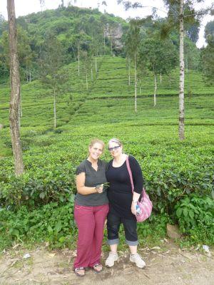 In the tea fields