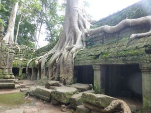 The trees and temple are interwoven